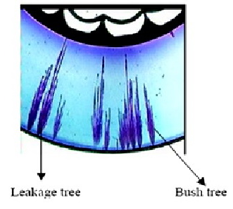 The Growth Of Water Trees In Xlpe Cable S Insulation